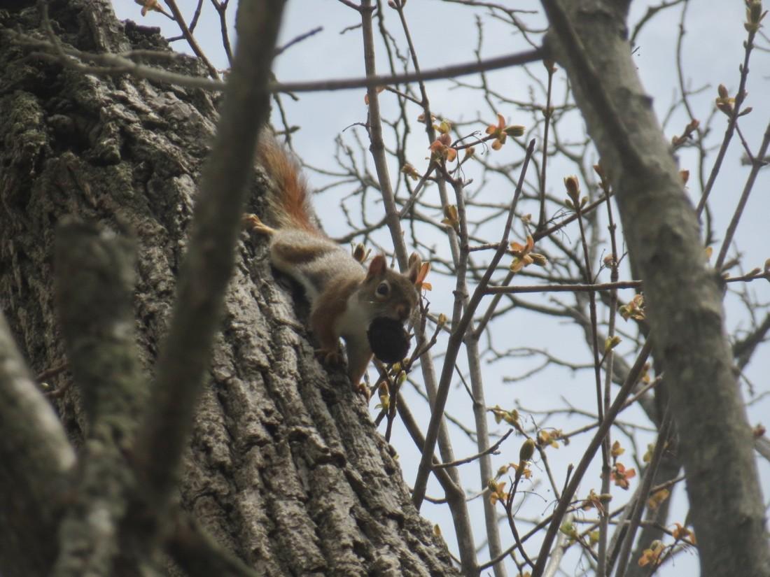 sassysquirrel